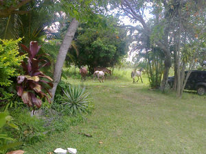 Pirenópolis retreat horses in garden.jpg