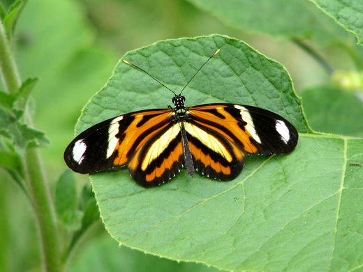 Orange and yellow butterfly 1.jpg