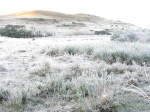 Frosty morning on the land.jpg