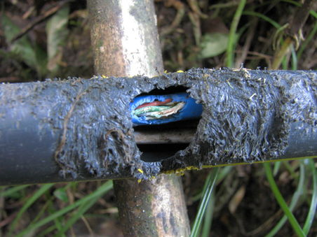 Pvc net pipe chewed.jpg