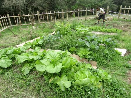 Vege patch mid September 2018.jpg