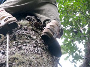 Climbing Araucaria for Pinhao - special boots.jpg