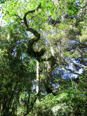 Forest canopy by the beach.jpg