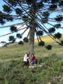 Beth and Rosie under Araucaria 1.jpg