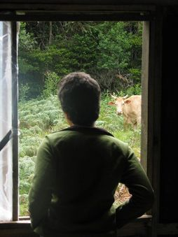 Beth looking at cow out window.jpg
