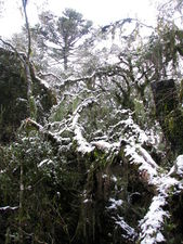 Forest in the snow.jpg
