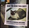 Awesome not lost cat.jpg