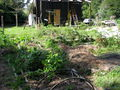 House and vege patch Jan 2014.jpg